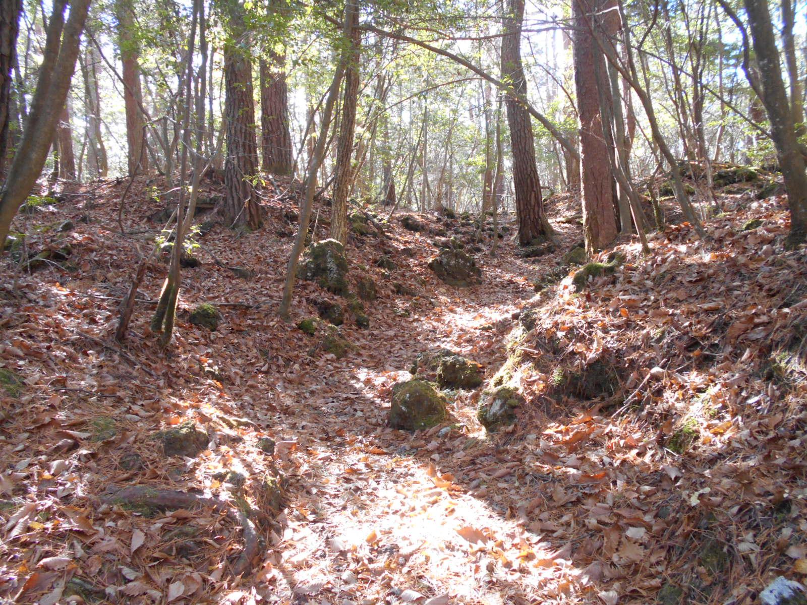 落葉と常緑樹と苔と…